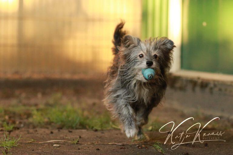 Hundeschule-GREH-10Mobum_0E6A0001