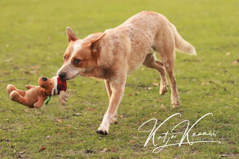Hundeschule-GREH-10Mobum_0E6A0002