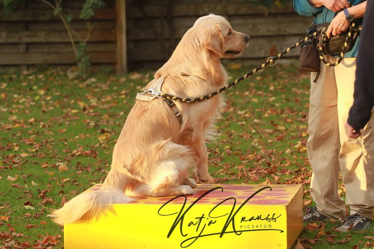 Hundeschule-GREH-10Mobum_0E6A0003