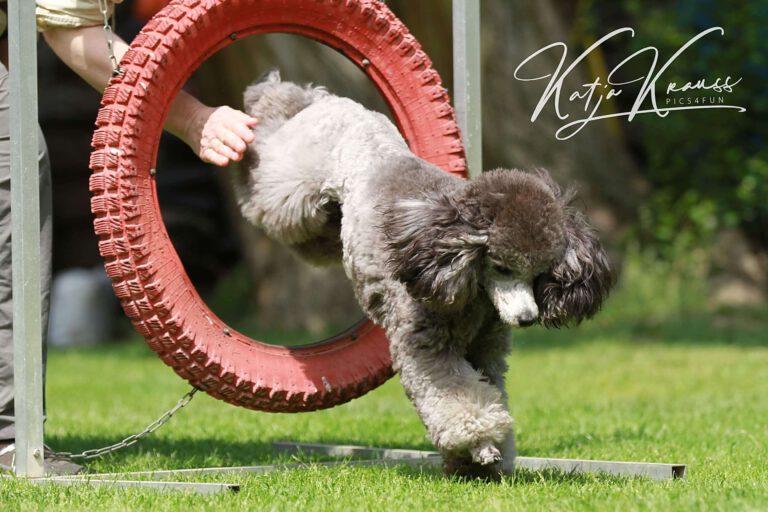 Hundeschule-GREH-10Mobum_0E6A0004