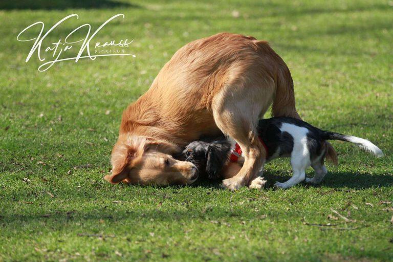 Hundeschule-GREH-10Mobum_0E6A0008