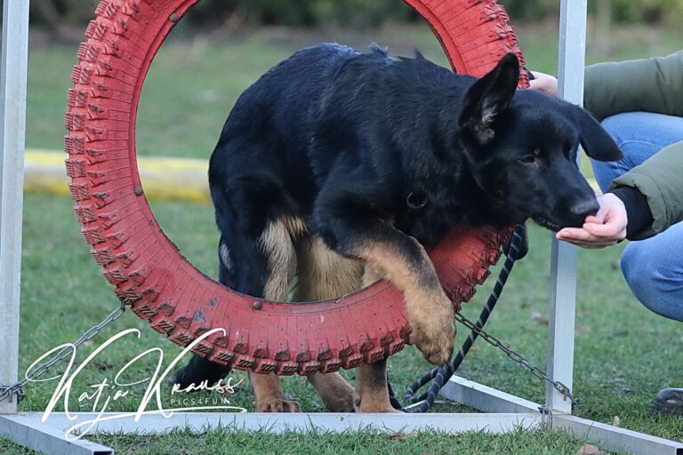 Hundeschule-GREH-10Mobum_0E6A7740