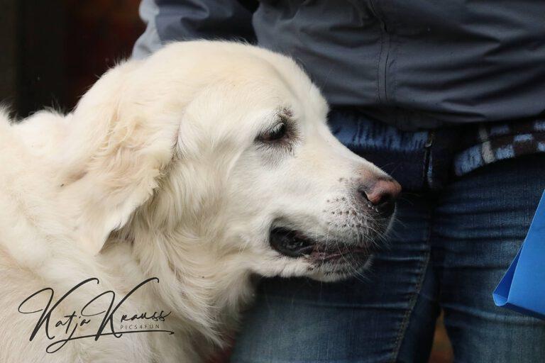 Hundeschule-GREH-11Grund_0E6A0001