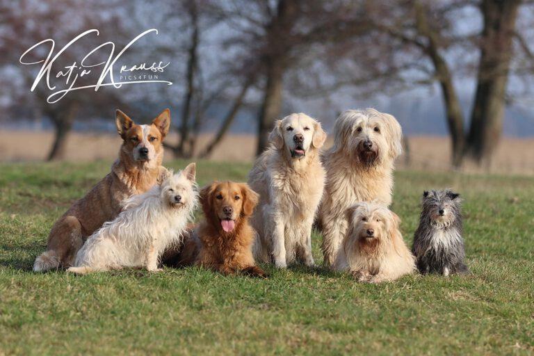 Hundeschule-GREH-11Grund_0E6A0002