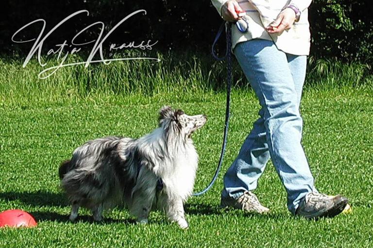 Hundeschule-GREH-11Grund_0E6A0005