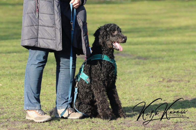 Hundeschule-GREH-11Grund_0E6A7390