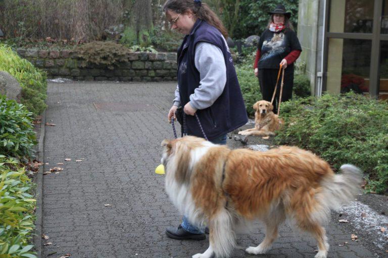 Hundeschule-GREH-12Verk_IMG_0002