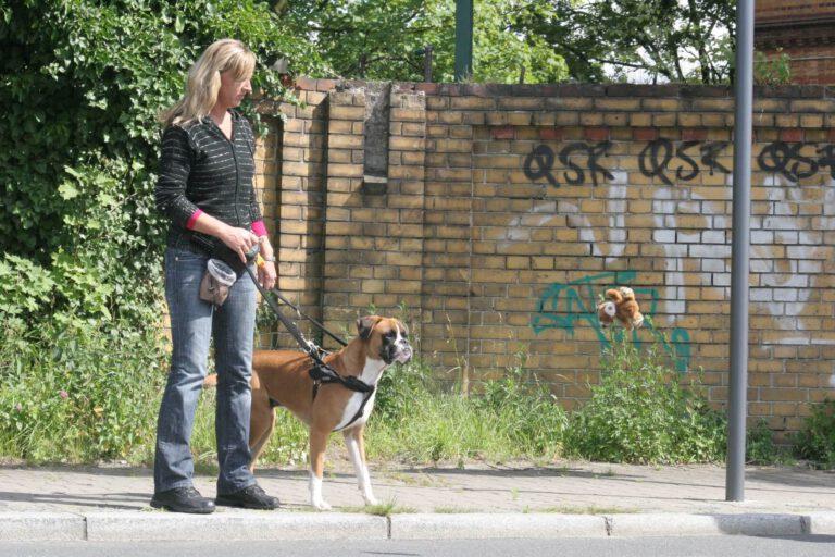 Hundeschule-GREH-12Verk_IMG_0004