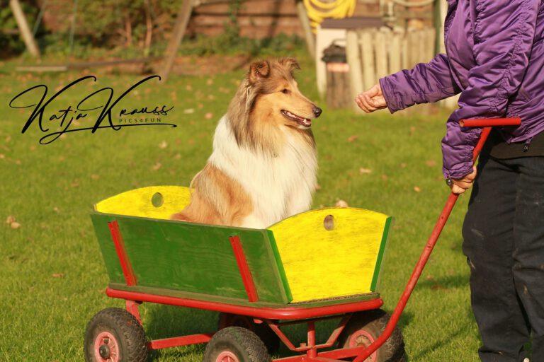 Hundeschule-GREH-13Mobk_Hadiya001