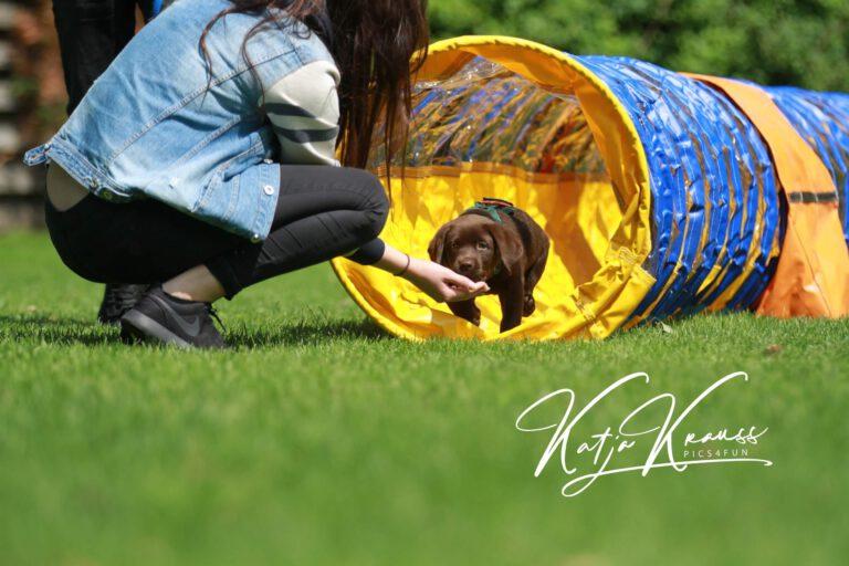 Hundeschule-GREH-13Mobk_Hadiya003