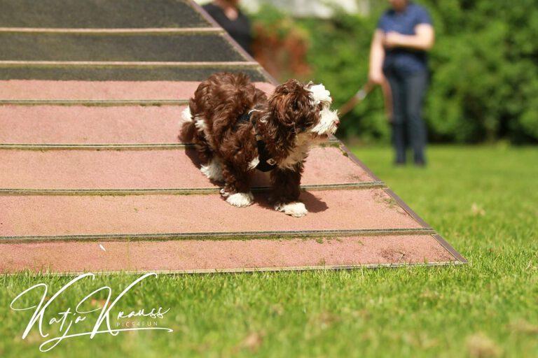 Hundeschule-GREH-13Mobk_Hadiya004