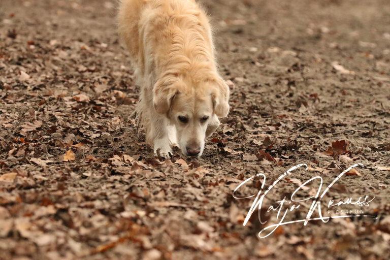 Hundeschule-GREH-14Schnük_0E6A0001