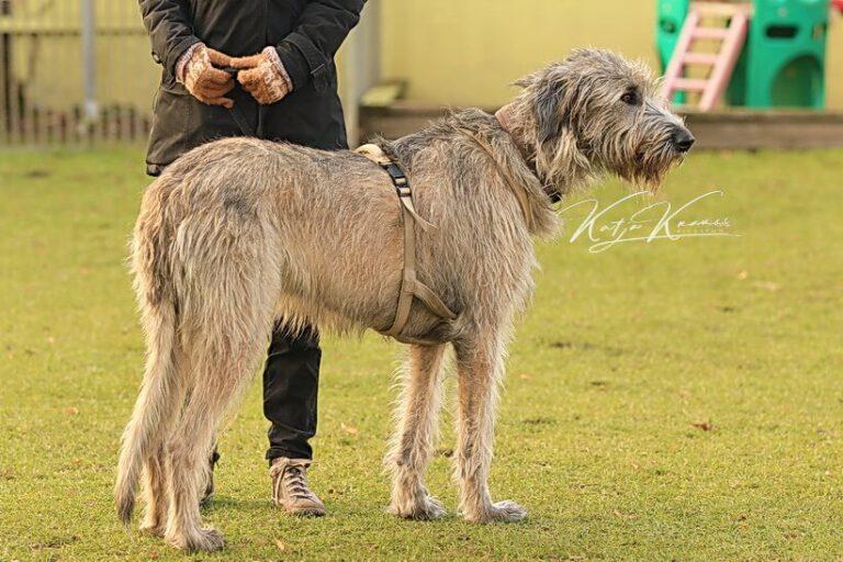 Hundeschule-GREH-16kost_0E6A0001