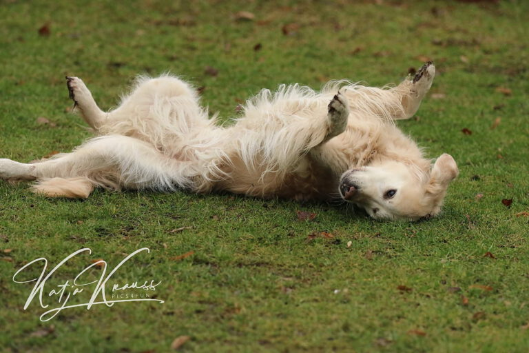 Hundeschule-GREH-16kost_0E6A0002