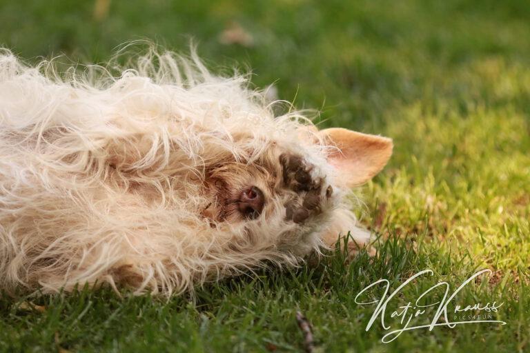 Hundeschule-GREH-16kost_0E6A0003