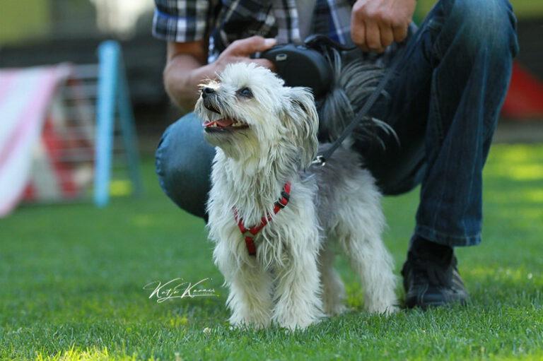 Hundeschule-GREH-16kost_IMG_0291