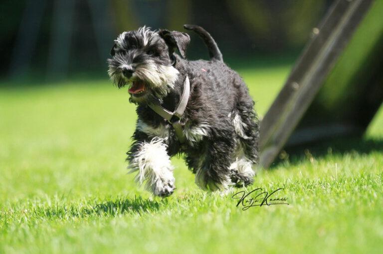 Hundeschule-GREH-16kost_IMG_0432