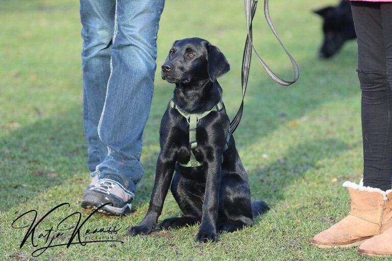 Hundeschule-GREH-17ES_0E6A7702