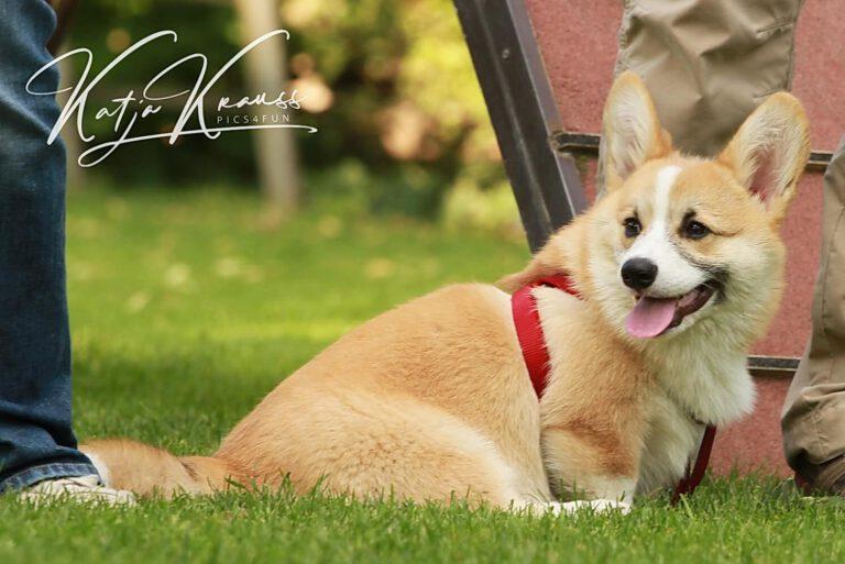 Hundeschule-GREH-17ES_0P2A0003
