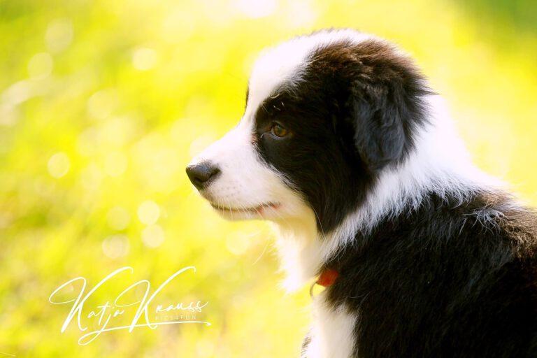 Hundeschule-GREH-17ES_0P2A0005