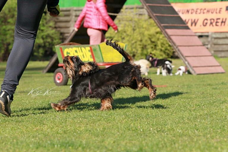 Hundeschule-GREH-17ES_0P2A1880