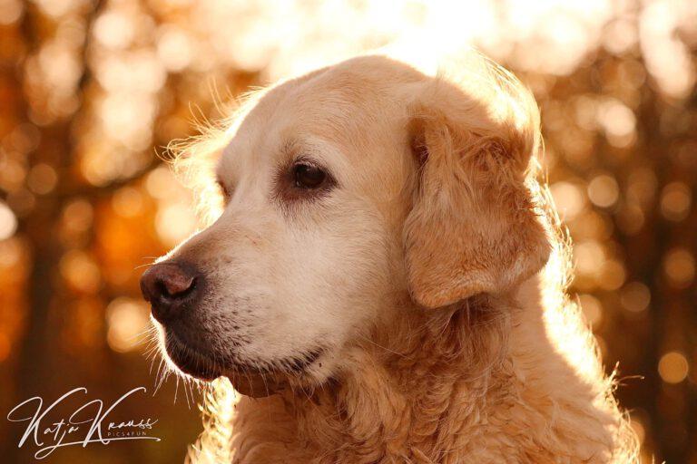 Hundeschule-GREH-19Ausbild_0E6A0001