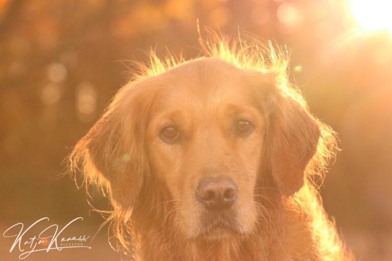 Hundeschule-GREH-19Ausbild_0E6A0002