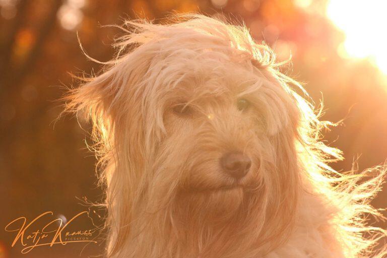Hundeschule-GREH-19Ausbild_0E6A0003