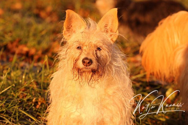 Hundeschule-GREH-19Ausbild_0E6A3897