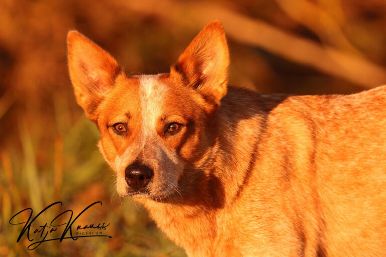 Hundeschule-GREH-19Ausbild_0E6A3911
