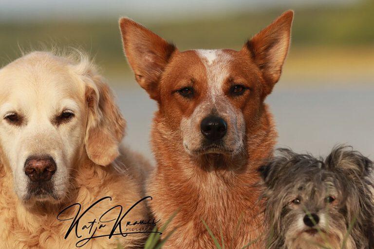 Hundeschule-GREH-1Home_0E6A0015