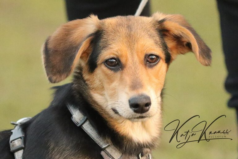 Hundeschule-GREH-1Home_0E6A3907