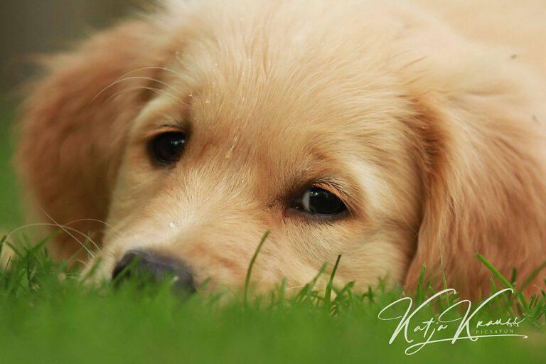 Hundeschule-GREH-1Home_IMG_0216