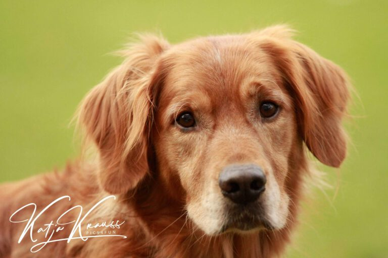 Hundeschule-GREH-1Home__MG_0001