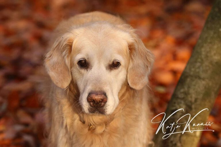 Hundeschule-GREH-1Home__MG_0002