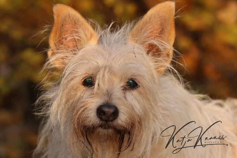 Hundeschule-GREH-1Home__MG_0003