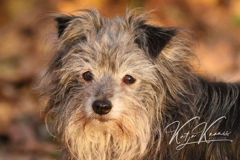 Hundeschule-GREH-1Home__MG_0004