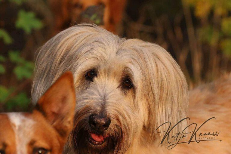 Hundeschule-GREH-1Home__MG_0005
