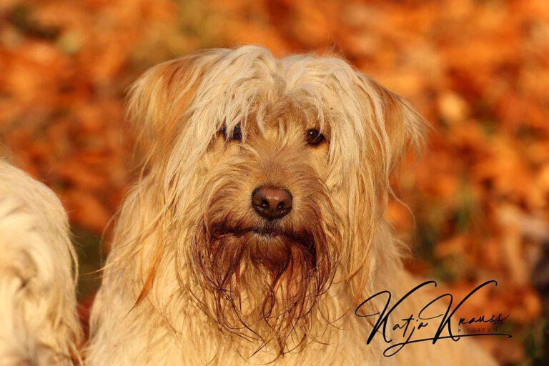 Hundeschule-GREH-1Home__MG_0006