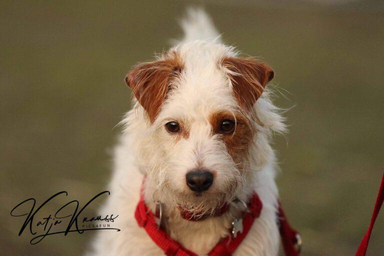 Hundeschule-GREH-1Home__MG_0007