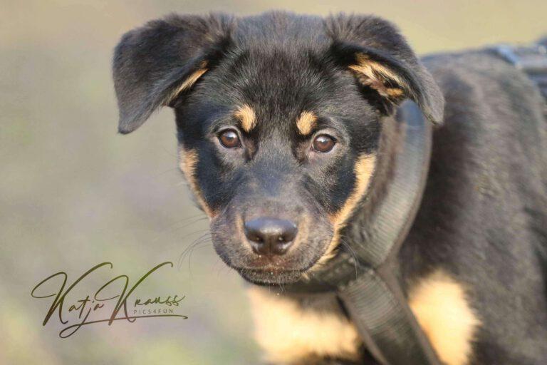 Hundeschule-GREH-1Home__MG_0009
