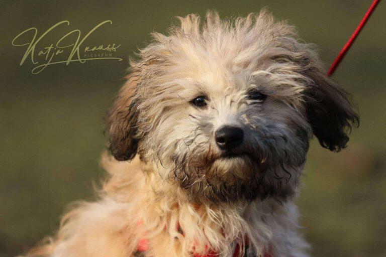 Hundeschule-GREH-1Home__MG_0010