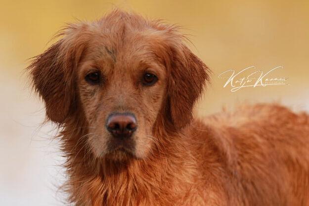 Hundeschule-GREH-1Home__MG_0011