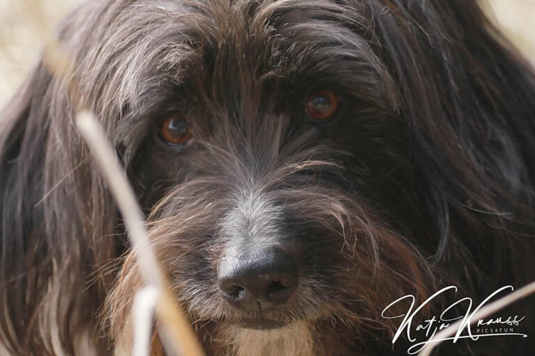 Hundeschule-GREH-1Home__MG_0012