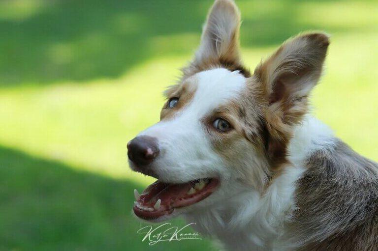 Hundeschule-GREH-1Home__MG_0013