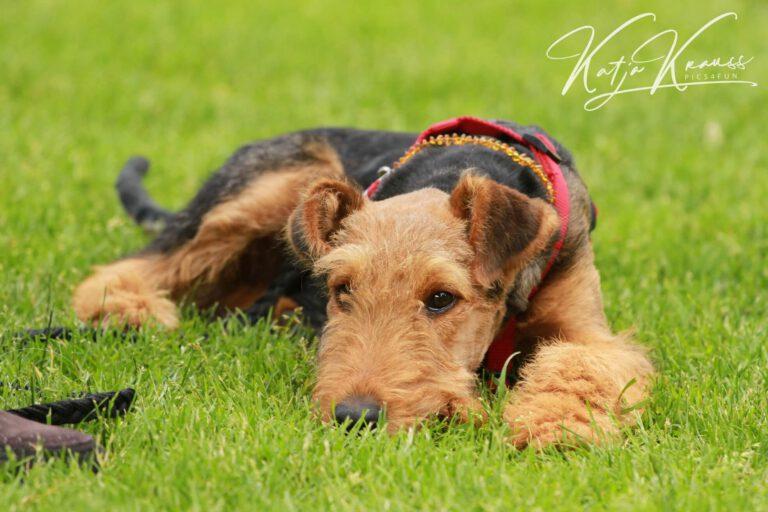 Hundeschule-GREH-20Prak_IMG_0001