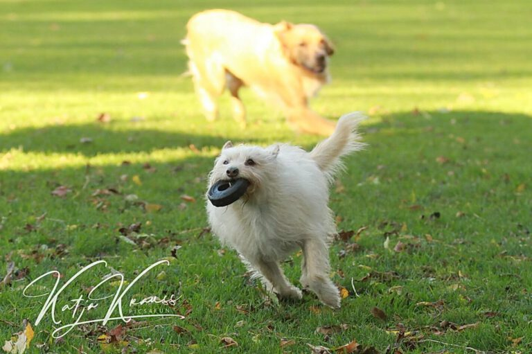 Hundeschule-GREH-20Prak_IMG_0003