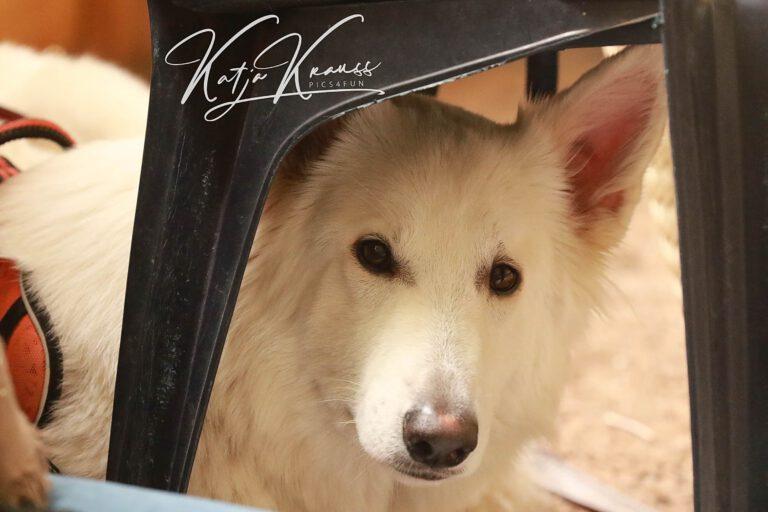 Hundeschule-GREH-22ttouchn_0P2A0001