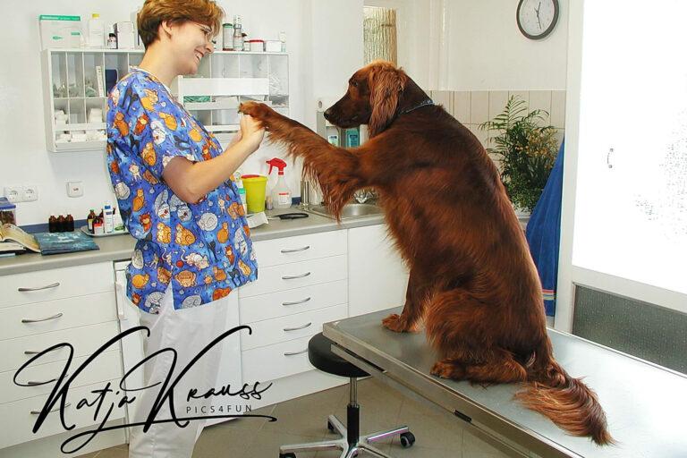 Hundeschule-GREH-22ttouchn_0P2A0002
