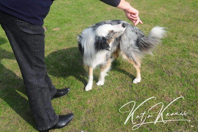 Hundeschule-GREH-22ttouchn_0P2A0003